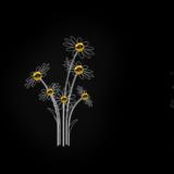 128_Daisy_flowers